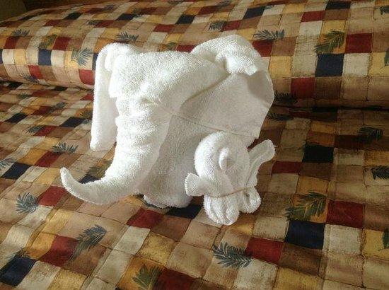 Cairns Motel: Éléphant et poussin