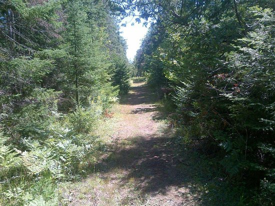 Wilderness State Park: Hiking trail