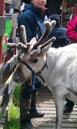 Tulach Ard House, Bed & Breakfast: Reindeer Centre, Glenmore, Cairngorms