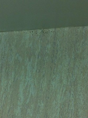Vittoria Hotel and Suites: black mould on bathroom wall