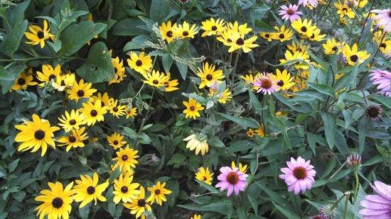 Whetstone Park / Park of Roses: Wild flowers