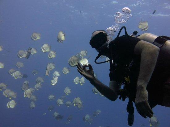 Searobin Dive Center : Great Dane
