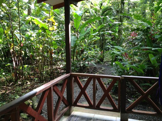 Pachamama Jungle River Lodge: View from the porch