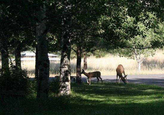 Chewuch Inn & Cabins: The back yard