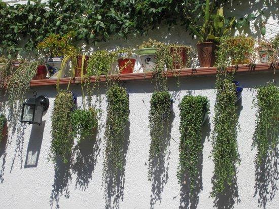 Braseria Ca La Nuri: A little backdoor garden