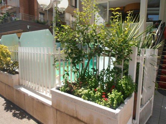 Hotel Arno: Esterno della piscina