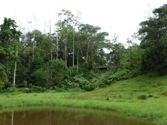 Selva Bananito Lodge : Sicht zum Restaurant-Gebäude