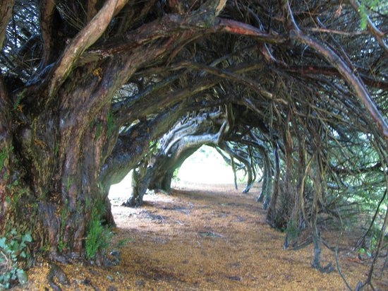 Where to see the world's most famous trees « Yuanita ...