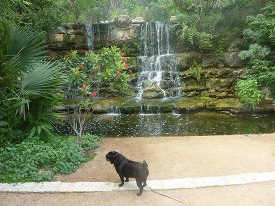 Pet friendly Zilker Botanical Garden