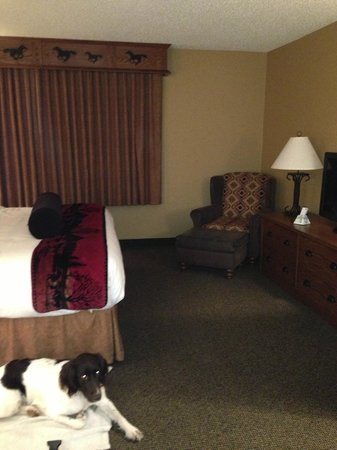 Best Western Plus Kelly Inn & Suites : Our dog in our roomy room