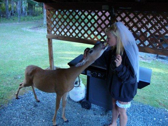 Tallpine Lodges: friendly deer