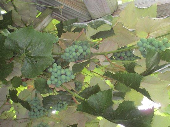 arbor at Lakewood Vineyards