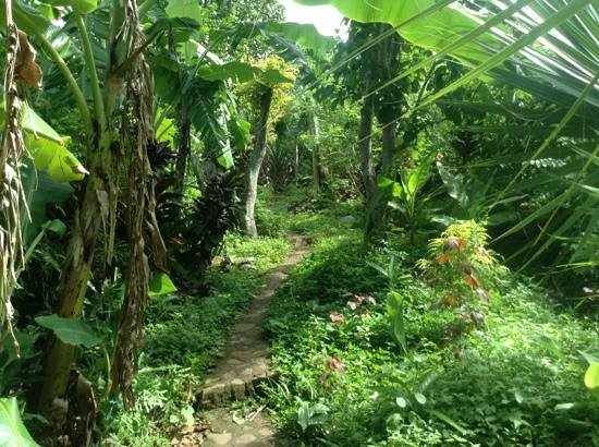 El Zopilote: Beautiful jungle-like paths!