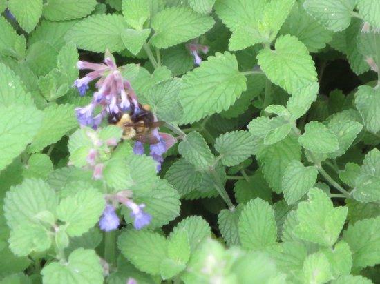 Baha'i House of Worship: bees at work