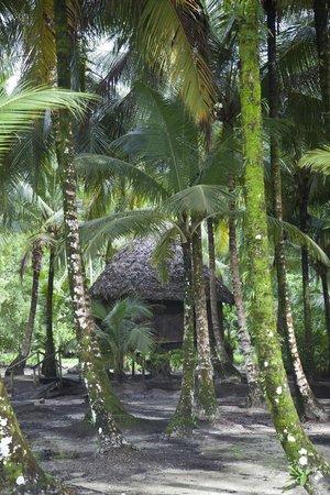 Buccaneer Resort: The cabin.