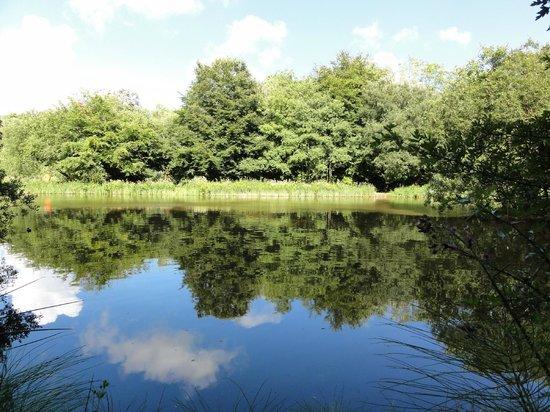 Llanerch Vineyard : Lakes and woodland