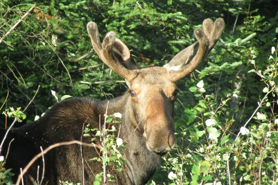 Northeast Whitewater - Day Tours: my moose
