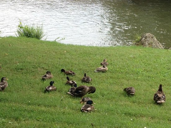 Camp Riverslanding: the kids loved feeding the ducks...they would come right up to the edge of our campsite