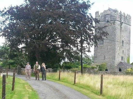 Ballyhannon Castle: a lovely walk up the path to see the Horses