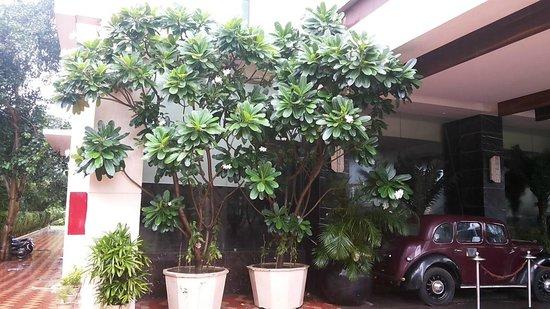 Godwin Hotel Haridwar: Amazing Champa Tree in Flower Pots