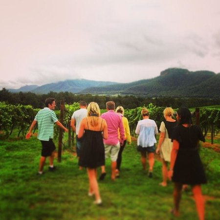 James' Hunter Valley Wine and Vineyard Tours : Heading into the vines in broke for a grape tasting!