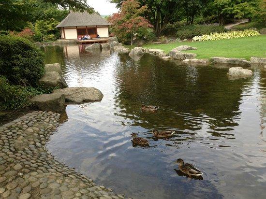 Laghetto giapponese con papere bild von planten un for Laghetto giapponese