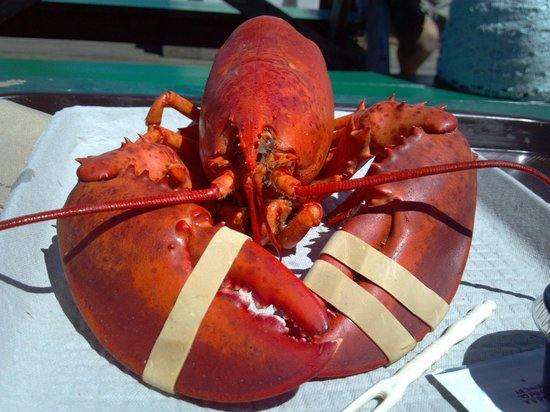 Lobster and clams al fresco! - Picture of Five Islands Lobster Co ...