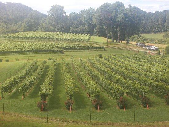 Stonewall Creek Vineyards: View of vineyards
