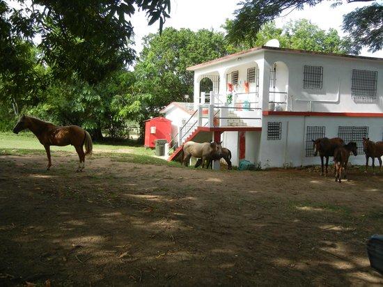 Estancia de Manzanares Guest Rooms: Horses