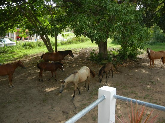 Estancia de Manzanares Guest Rooms: Horses in the backyard