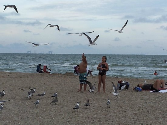 Malaquite Beach: feeding the seagulls