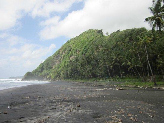 Rosalie Bay Resort: Turtle beach