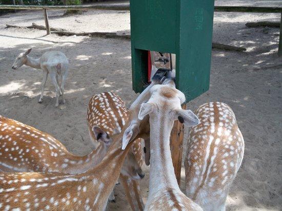 Wisconsin Deer Park: They love the feeders!