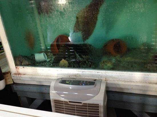The Maritime Aquarium : just to show some of the dirty tanks others also mention