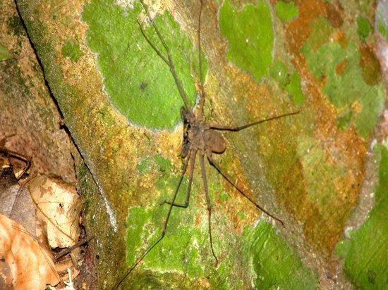 Inkaterra Reserva Amazonica Excursions: spider