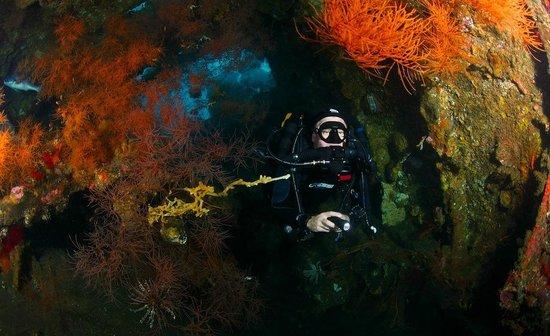 Villa Alba Dive Resort: Diving the liberty wreck on rebreathers