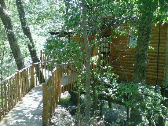Treehouse Cottages: hideaway