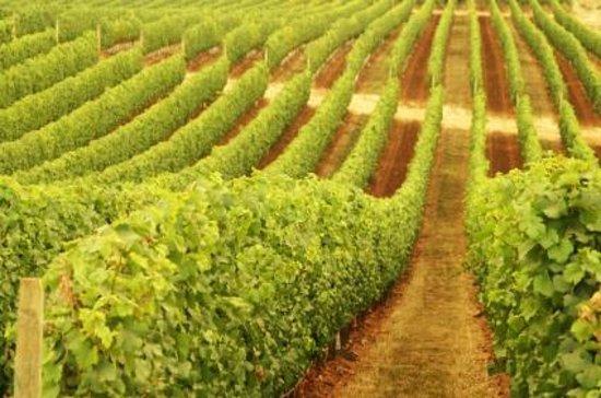 Margaret River Tours: Vineyard