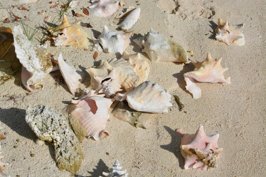 Isla Marisol Resort: shells along the island beach