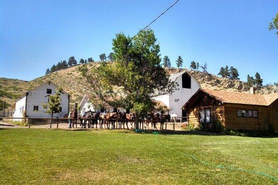 Eatons' Ranch: good morning