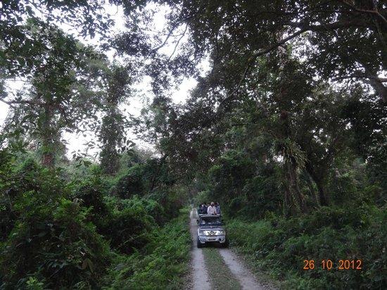 Chilapata Wildlife Sanctuary: Jeep Safari