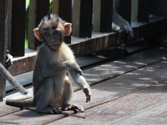 Cute Baby Monkey In Karma Kandara Picture Of Karma Kandara