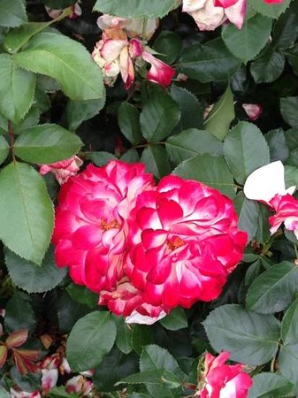 Washington  Park : another stunning flower