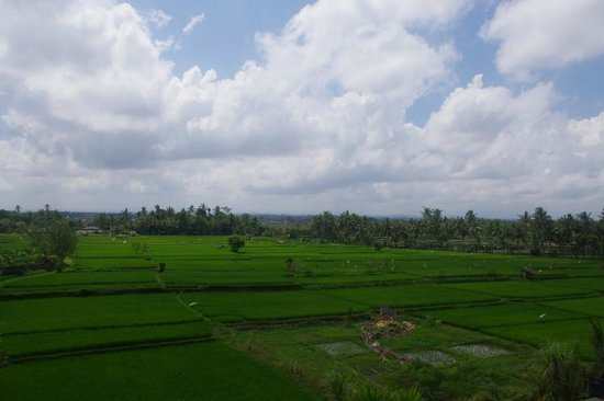 Suly Vegetarian Resort & Spa: Rice fields - view from room (4th floor balcony)