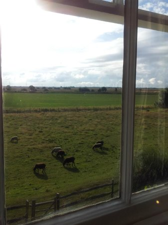 Cliff Farm: Sheep from bedroom window