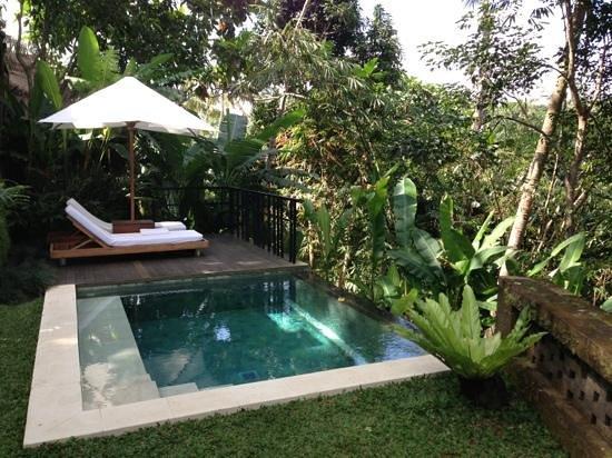 Uma by COMO, Ubud : Notre piscine sur la jungle