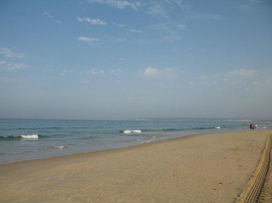 Apartamentos la Atarraya: beach