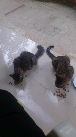 Tropic Hotel: små söta katter som vi gav mat