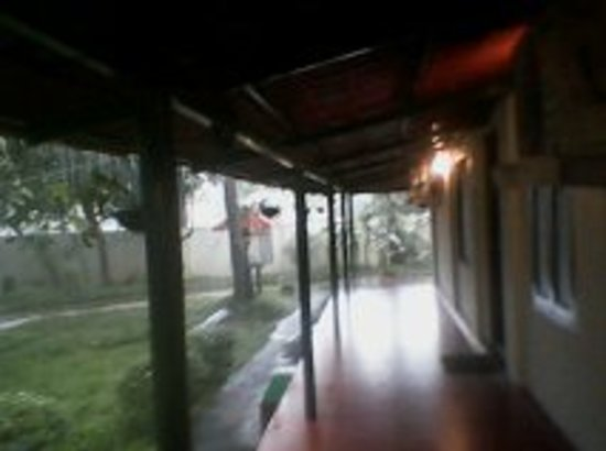 Palm Grove Service Villa : Palm grove in rain -4