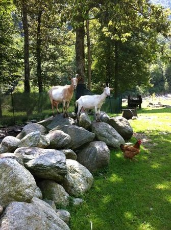 Agriturismo In Valle sul Fiume: animali del l'agriturismo